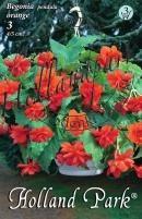Begónia pendula (futó) narancs