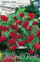 Begonia Pendula  (futó)  piros
