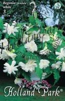 Begonia Pendula  (futó) fehér