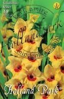 Gladiolus Jester