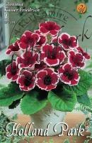 Gloxinia 'Kaiser Friedrich' piros-feh.