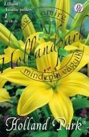 Lilium  asiatic yellow