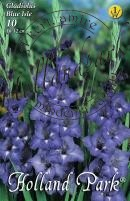 Gladiolus  Blue Isle