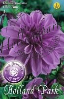 Dália Dekoratív Giant Lilac Time