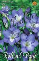 Frézia szimplavirágú kék