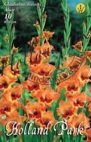 Gladiolus Pillangóvirágú Alice