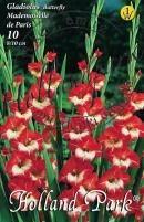 Gladiolus Pillangóvirágú Mademoiselle de Paris