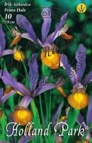 Iris Hollandica Frans Hals