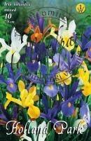 Iris Hollandica színkeverék
