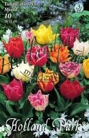 Tulipán Korai Teltvirágú színkeverék