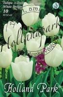Tulipán Triumph White Dream