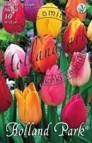 Tulipán Triumph Színkeverék