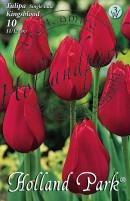 Tulipán egyszerű késői Kingsblood