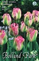 Tulipán Virdiflora Groenland