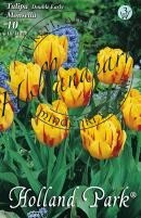 Tulipán Korai teltvirágú Monsella