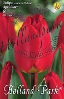 Tulipán Darwin Apeldorn