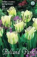 Tulipán Virdiflora Spring Green