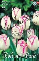 Tulipán Triumph Shirley
