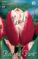 Tulipán Triumph Leen van der Mark