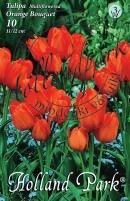 Tulipán csokros Orange Bouquet