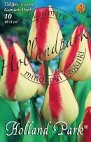 Tulipán Triumph Garden Party