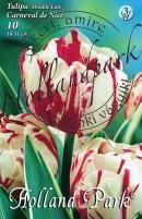 Tulipán dupla késői Carneval de Nice