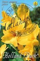 Canna Indica sárga