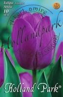 Tulipán Triumph Attila