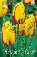 Tulipán egyszerű késői La Courtine