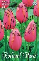 Tulipán egyszerű késői Menton