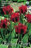 Tulipán Virdiflora Hollywood
