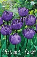 Tulipán dupla késői Blue Diamond