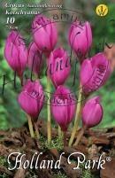 Crocus őszi virágzású Kotschianus