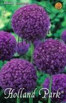 Allium Giganteum díszhagyma