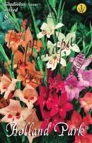 Gladiolus Nanus Mixed