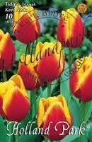 Tulipán Triumph Kees Nelis