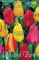 Tulipán Darwin Hybrid mix