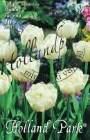Tulipán dupla késői Mount Tacoma