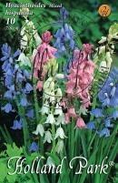 Hyacinthoides hisp. színkeverék/10