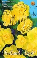 Nárcisz Double Yellow Cheerfulness