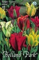 Tulipán Virdiflora Mixed